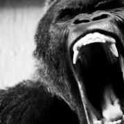 Ape Shifter // Ape Shifter